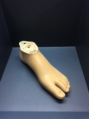 Otto Bock Wood Prosthetic Foot Size 26L