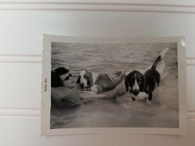 1961 Basset Hound Dog Photo Picture Floating BEACH DAY with MOMMA ~~ CUTE ~~~~~~