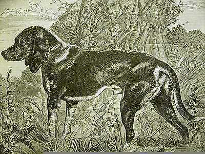 Edwin Landseer BEAGLE on the HILL 1870 Antique Engraving DOG Print Matted