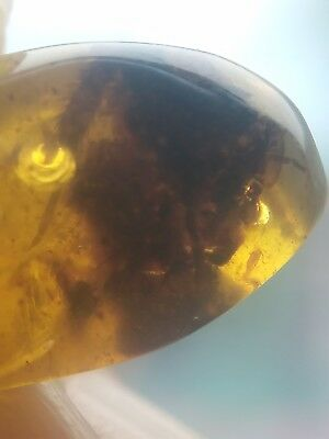 Burmite amber insect,collection,interesting,free shipping,gift #j101