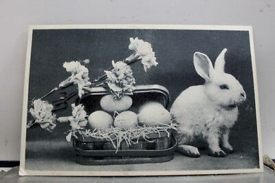 Greetings Bunny and Eggs Postcard Old Vintage Card View Standard Souvenir Postal