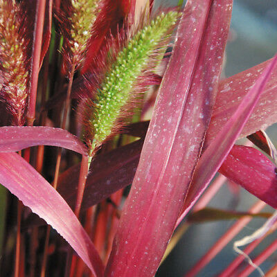 Different Varieties Of Hardy Perennial Grass For Your Garden