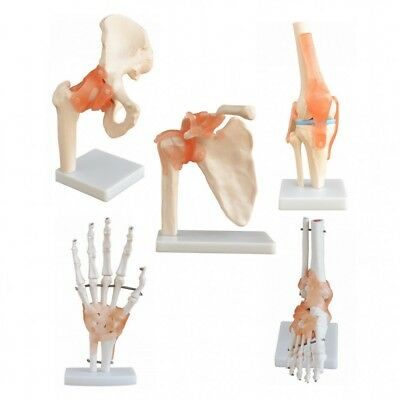 Anatomy Joint Set: Hip, Shoulder, Knee, Hand and Foot Models