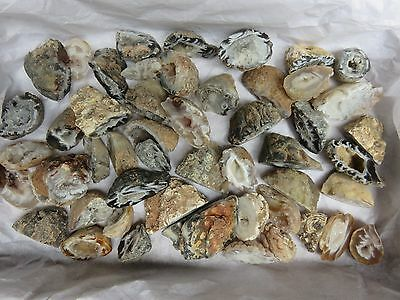 Natural Agate Oco 1 Lb Lots 50 Pieces Total Geodes Half Specimens Polished #96