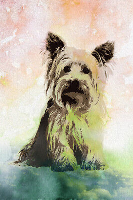 Dogs Yorkshire Terrier Yorkie Yorkies Painting Color Background Poster 12x18