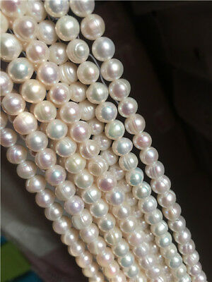 WHOLESALE 4-8MM WHITE AKOYA CULTURED PEARL NECKLACE ( free clasp ) gift