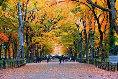 New York City Central Park Walk in the Park Photo Art Print Poster 24x36 inch