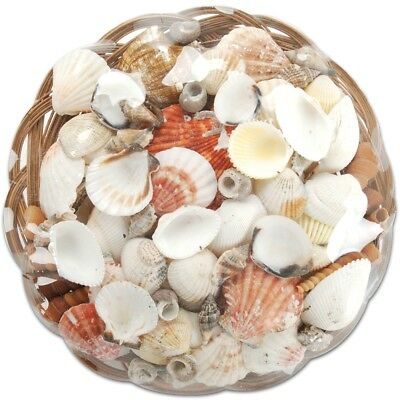 "Sea Shell Basket 10""-natural"