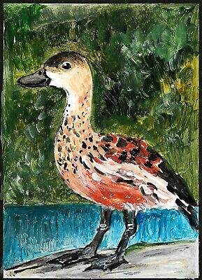 ACEO Original Painting Art Card Acrylic Wondering Whistling Duck Bird