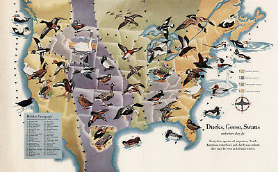 Pictorial Map of Migrating Birds Ducks Geese Swans US Canada Wall Poster Print