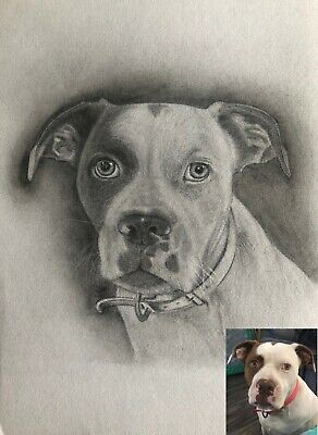 Custom Pet Portrait Pencil Drawing - Wall Art