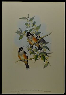 John Gould Buff-sided Robin Bird British Museum Official Limited Print