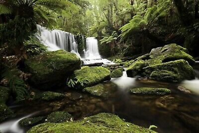 Green Forest Waterfall - Woods Trees Nature Wall Art Poster / Canvas Pictures