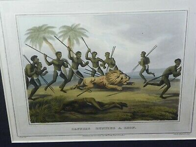 Original Orme & Howitt Georgian Hand Colored Aquatint 1813 Caffres Hunting Lion