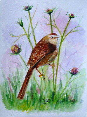 Carolina Wren in Summer, painting a day 9x12  watercolor, unframed