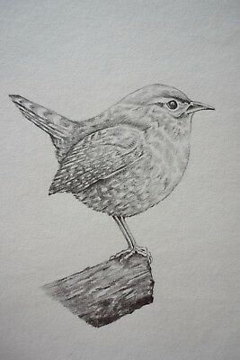 Original pencil drawing bird portrait A4 wren