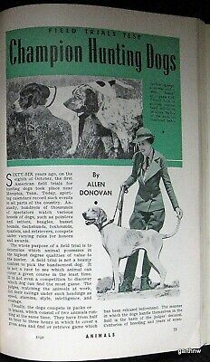 Champion Hunting Dogs 1940 Pictorial Field Testing Trials Pointers & Retrievers