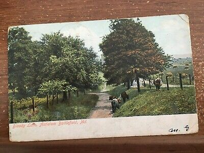 Bloody Lane, Antietam Battlefield Maryland Nature Post Card PC 1906 CIVIL WAR