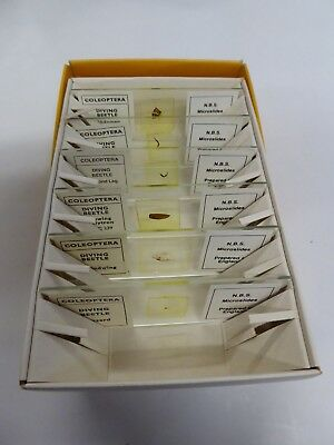 NBS  MICROSCOPE SLIDES Box of 6 Subject BETTLE PARTS,  6/X
