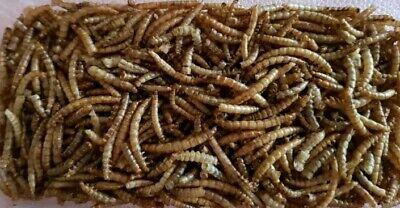 Dried Mealworms Ideal for Song Birds, Chickens, Reptiles and Fish
