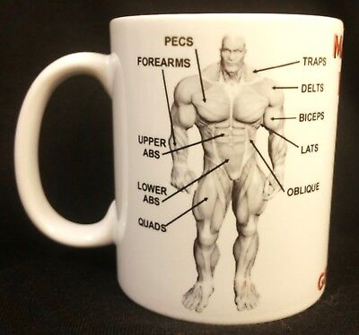 MAJOR MUSCLE GROUPS  MUG Body building, weight training, Fitness, Collectable