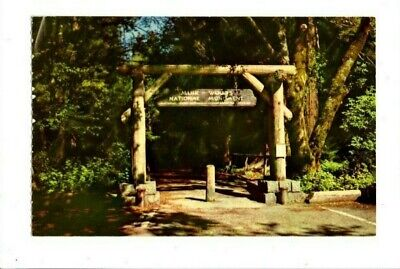Gateway To Muir Woods National Monument Cal  Vintage Postcard