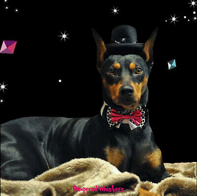 """The Aristocrat top hat and Wild Card Bowtie collar for dogs with 12-15"""" neck"""