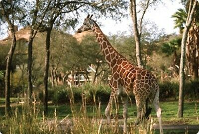Disney's Animal Kingdom Kidani SAVANNA VIEW Studio 1 night 5/12-5/13 SAVE $200