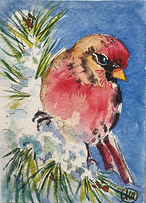 purple finch bird on pine tree - ACEO ORIGINAL WATERCOLOR PAINTING