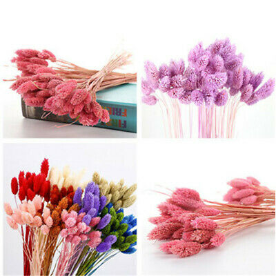 20Pcs/Bunch  Bunny Tails Rabbit Tail Grass Dried Flowers Bouquets Home Decor HOT