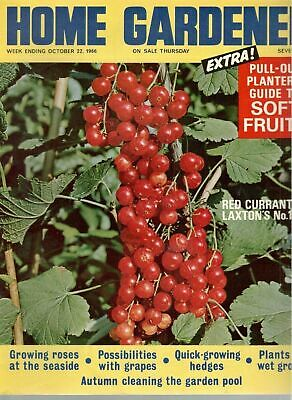 1966 22 OCTOBER 37861 Home Gardener Magazine  RED CURRANT LAXTON'S NO 1