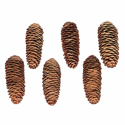 18 x Natural Large Long Pine Cones for Craft & Decoration+Carabiner Y
