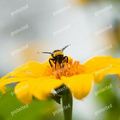 Stunning Digital Photography Picture Wallpaper bumblebee, insectphotography, bee