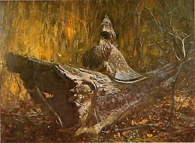 Print. Game Birds.  Ruffed Grouse