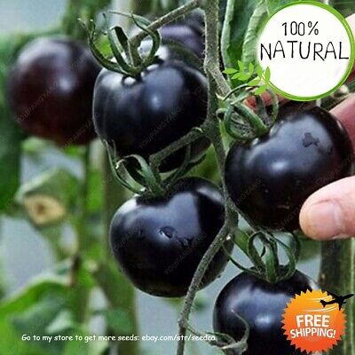 Organic Black Tomato Seeds Plants Chinese & Vegetable Garden Home Rare 100pcs
