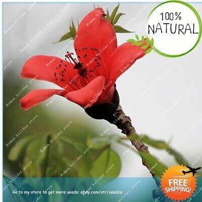 30 SEEDS KAPOK Tree Red Flower Home Garden Decor Plant Bonsai Pot