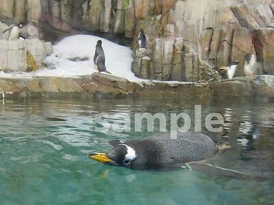 1 Swim Swimming Penguin Bird Digital Picture Image Photo 0.99 Cent Buy Now