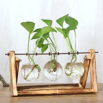 Glass Planter Bulb Vase with Retro Solid Wooden Stand and Metal Swivel Holder SS