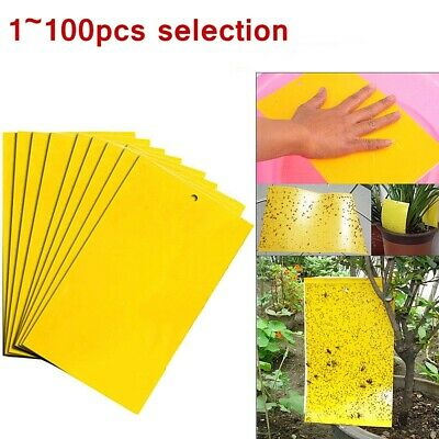 LOT Large Yellow Greenhouse Sticky Traps - Catch Multiple Flying Insect Pests UK