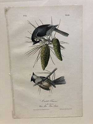 1st ed Octovo Audubon printed by Bowen, Crested Titmouse, Plate #125