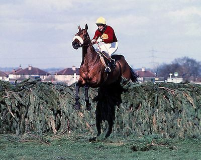 Red Rum Ridden By Tommy Stack 1977 Grand National (Horse Racing) Photo Print 04