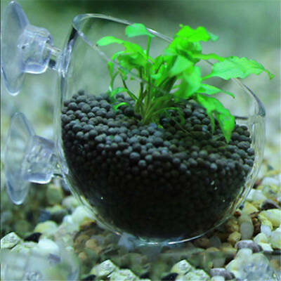 Grasses Aquarium Tank Aquatic Plants Landscape Cup Cultivation Basin Tropical