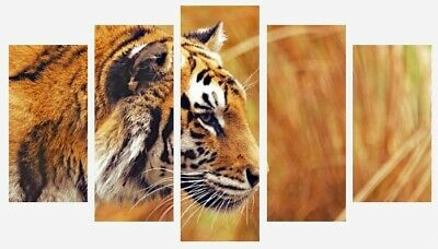 Bengal Tiger - Wild Animal Colourful Wall Art 5 Split Panel Canvas Pictures