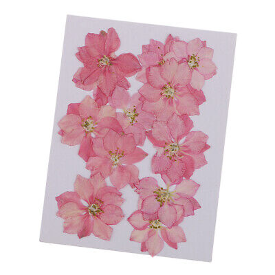 12 Pcs Dried Pressed Flowers Larkspur for Scrapbooking Arts Craft Supplies