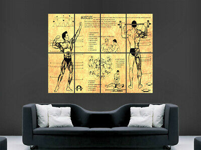 Anatomy Human Body Poster Muscles Bodybuilding Science Art Wall Giant Poster