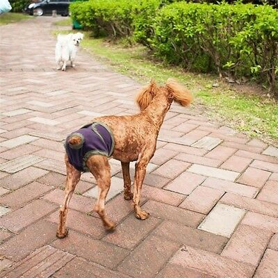 Pet Dog Sanitary Nappy Diaper Pet Physiological Pants Shorts Underwear for Dogs