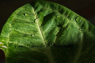 Digital Photograph Wallpaper Image Picture Free Delivery - Droplets Series
