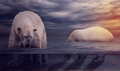 Cute Polar Bears - Catch Fish Nature Wild Animal Photo Poster / Canvas Picture