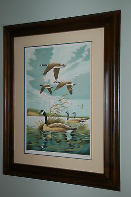 Duck Unlimited Lithograph print 22 x 28 with framed solid wood & signed