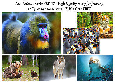 Animal Pictures Wildlife Photo Poster Print ONLY Wall Art Prints A4 - 30 Types